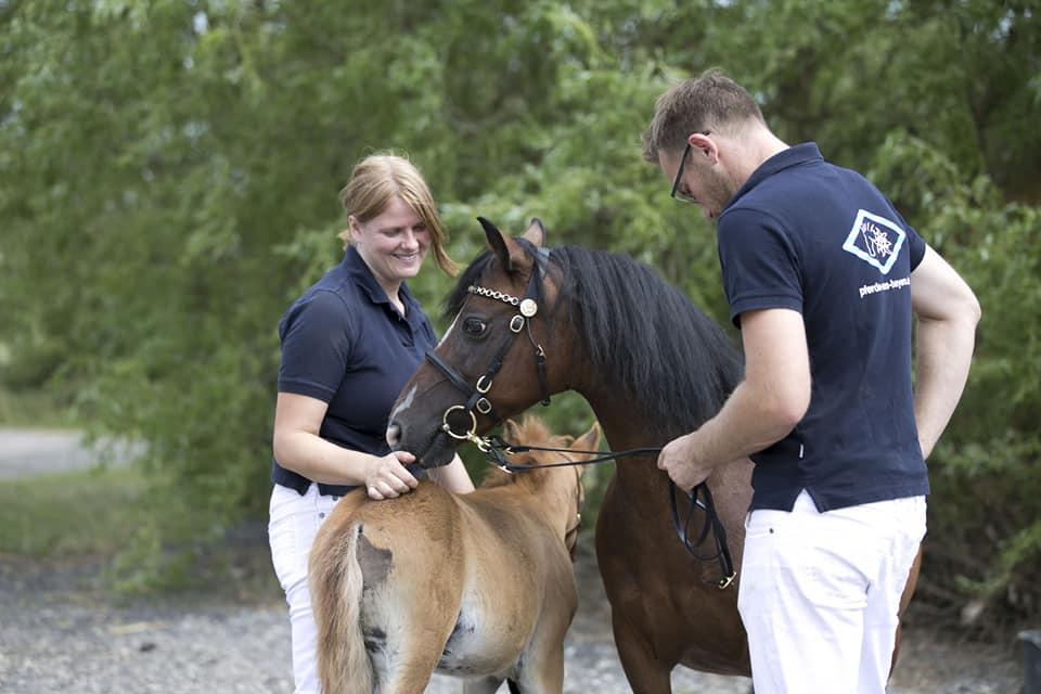 Failshofer Ponys